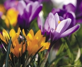 Calendar de perete Flowers 2014 - Luna Februarie