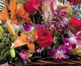 Calendar de perete Flowers 2014 - Luna Ianuarie
