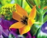 Calendar de perete Flowers 2014 - Luna Octombrie