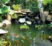 02_Febrariue_Gardens