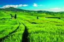 calendar de perete green 2015 - luna iunie