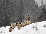Calendar de perete Rural 2014 - Luna Noiembrie