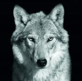 calendar perete animale 2017 luna februarie