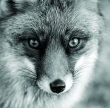 calendar perete animale 2017 luna iulie