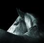 calendar perete animale 2017 luna august